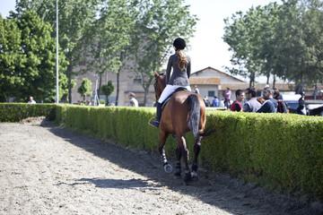 cavallo salto equitazione
