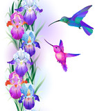 Seamless pattern with Iris flowers and hummingbird