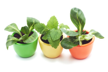 three plants in varicolored ceramic cups.
