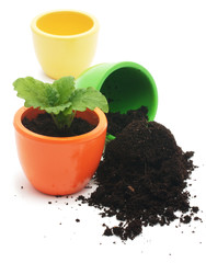 one plant in yellow cup and cup with ground.