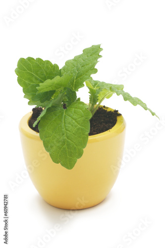 one plant in yellow ceramic cup.