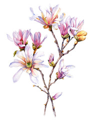 Watercolor with Magnolia