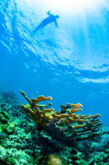 views from the coral reefs of the caribbean sea.