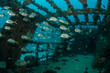 Leinwanddruck Bild - shipwreck, caribbean sea