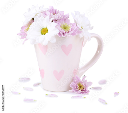 Beautiful chrysanthemum flowers in cup isolated on white