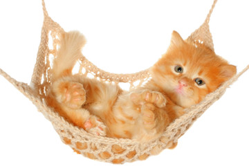 Cute red haired kitten lying in hammock