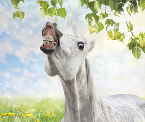 horse is happy about spring and summer , dandelion, pasture