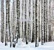 Snowman in winter birch forest