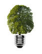 Glühlampe mit Baum