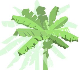 Banana tree - vector
