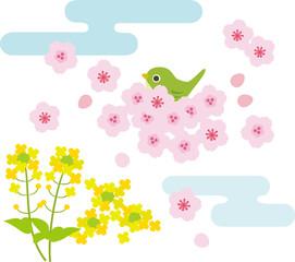 桜と菜の花の景色