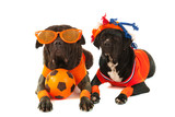 Dogs as Dutch soccer supporters