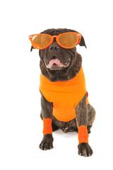 Dog as Dutch soccer supporter