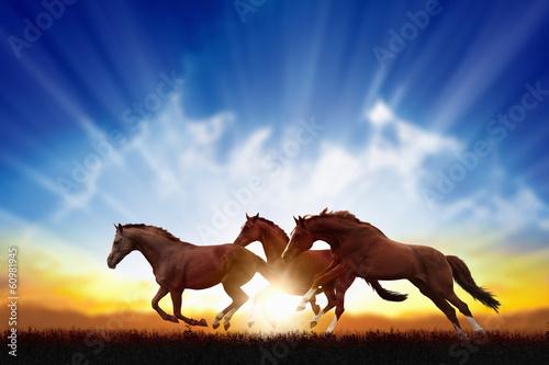 Foto op Plexiglas Paarden Running horses
