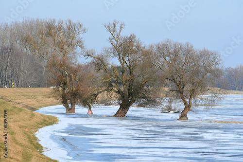 Deich an der Oder Hochwasserschutzgebiet - 60984199