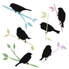 vector sparrow silhouettes