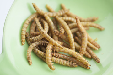 edible roasted and spiced mealworms
