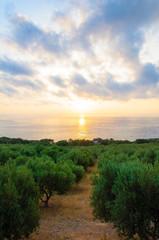Wide view of a Cretan landscape, island of Crete, Greece