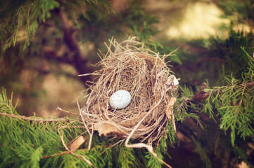 bird nest with blue egg