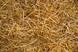 Straw Abstract Texture