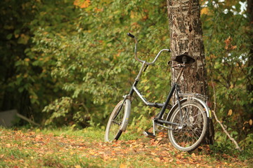 old folding bike stands in tree fall