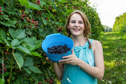 Young woman in blue dress picking blackberries - 60996551