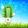 Bulb on the meadow