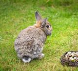 Osterhase mit Osternest und Eiern