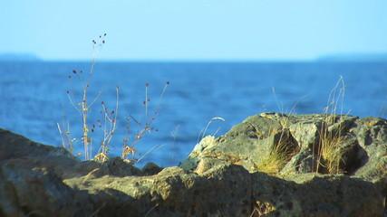 Sight at lake