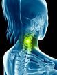 transparent female skeleton - cervical spine