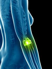 transparent female skeleton - elbow joint