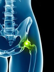 transparent female skeleton - hip joint