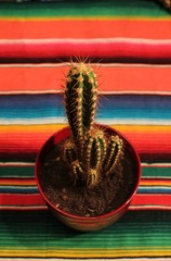 Mexican fiesta poncho rug with cactus
