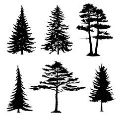 coniferous trees silhouettes, collection