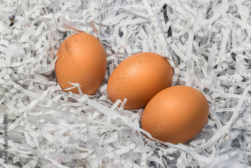 Three eggs in the pile of torn paper bits
