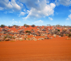Autralian Outback. Terrain colors with bush and red sand
