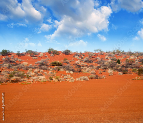 Foto op Canvas Baksteen Autralian Outback. Terrain colors with bush and red sand