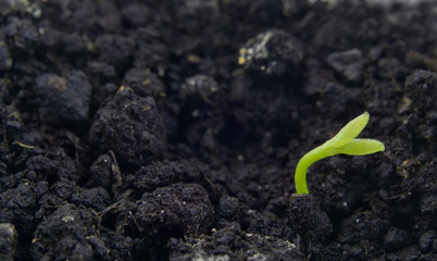 seedling in ground