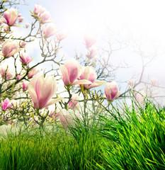 Osterwiese mit Magnolienbaum