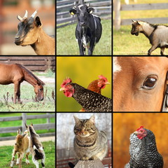 collage made with farm animals images