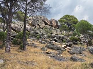 Granito y pinos en Cadalso de los Vidrios