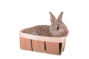 A small rabbit in a basket isolated