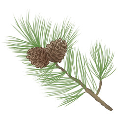 Pine tree branch. Pinecone Collection. Vector Pine cone set.