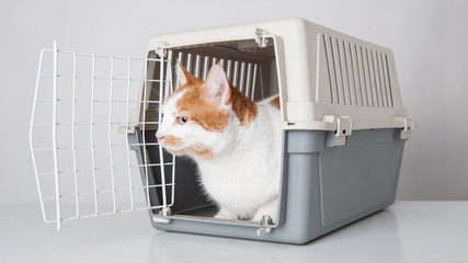Red and white cat inside plastic cage on white background.