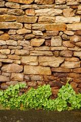 Hintergrund Bruchsteinwand mit Bewuchs