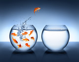 goldfish jumping - improvement and career concept - Fine Art prints