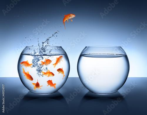 Leinwandbild Motiv goldfish jumping - improvement and career concept