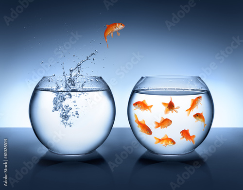Poster goldfish jumping out of the water - alliance concept