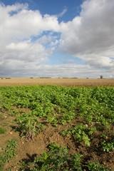 Lincolnshire landscapes