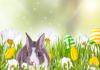 Easter baby rabbit with green grass, eggs and flower on natute